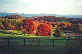 12797_Autumnview